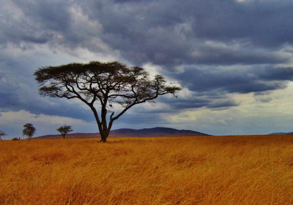 Cestovatelská přednáška - Národní parky Tanzánie